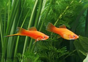 Продам товары для животных и аквариумных рыбок. Обновлено 20.01.2020г. - Страница 14 Ceb70d34153c2e379c0aa61f86f06a19