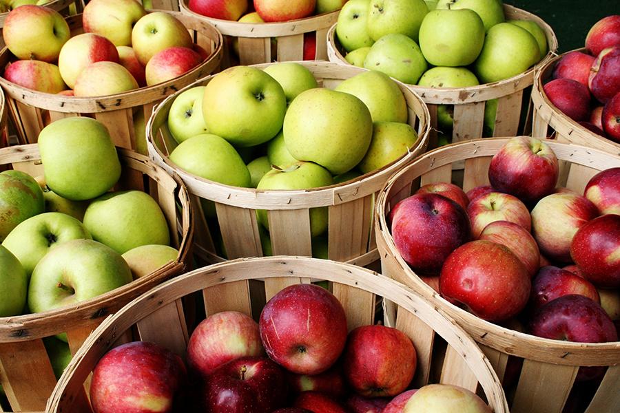 Как вырастить колоновидную яблоню: секреты, советы, рекомендации