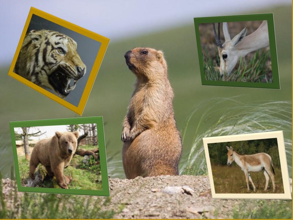 фауна-Казахстана.jpg