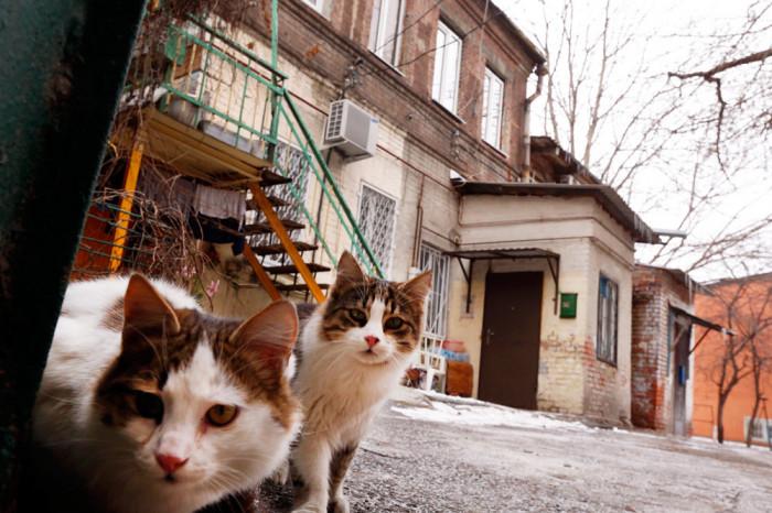 Сносные условия: Вводятся новые правила для переселения из аварийного жилья [В России]