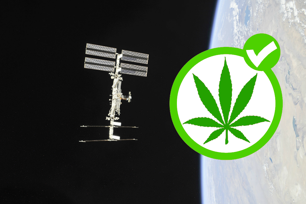 Орбите марихуана на конопли сканворд ткань 3 буквы