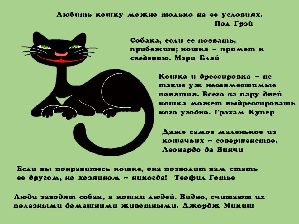 кошки-цитаты.jpg