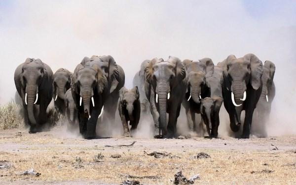 На фото слоны
