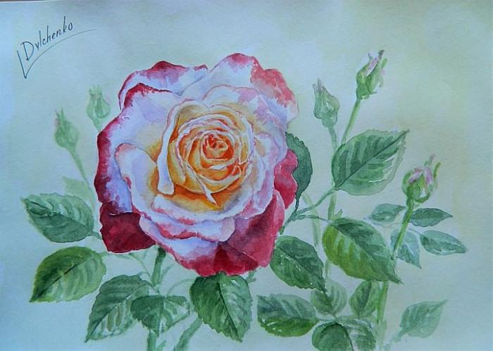Акварельная роза.jpg