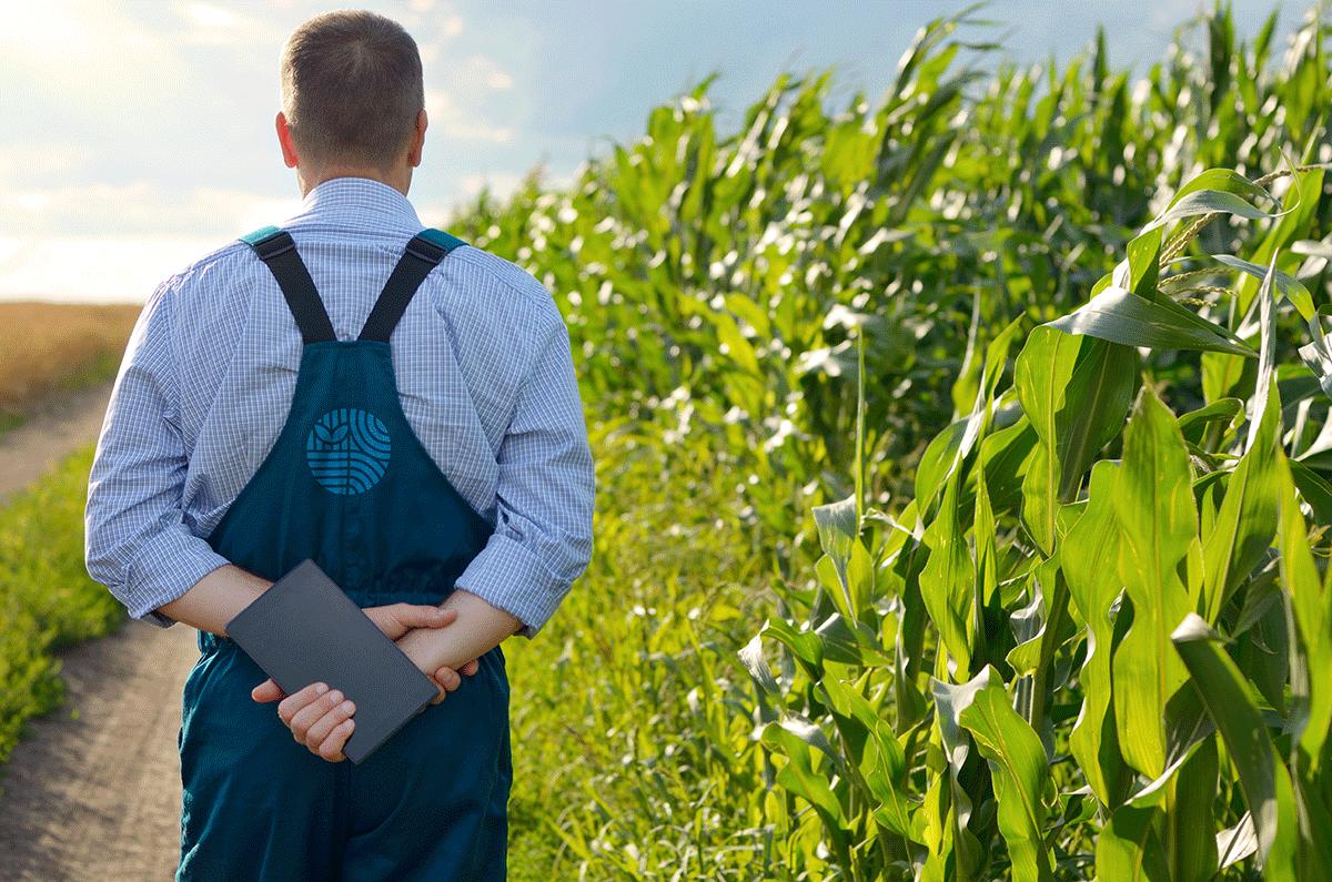 Применений биоудобрений Biotence на полях