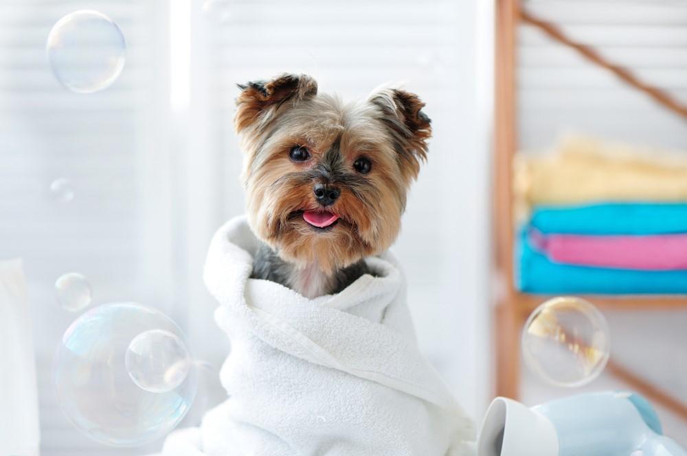 Груминг и тримминг для собаки