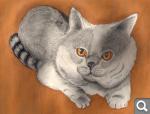 """Голосование """"Британские кошки"""" *"""